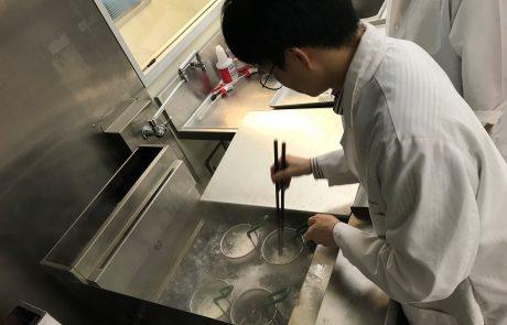 Korean Noodle Flour Technical Team Final Product